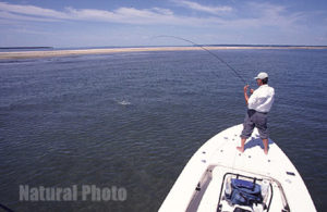 Sight Fishing On the flats