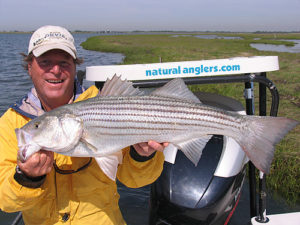 Striper fly fishing on the flats